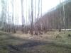 temnayapad200904288.jpg