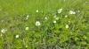 podk_trava