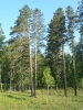 vangarsk20100666